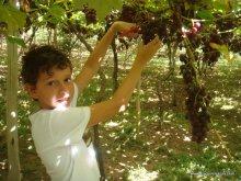Biel viu a uva