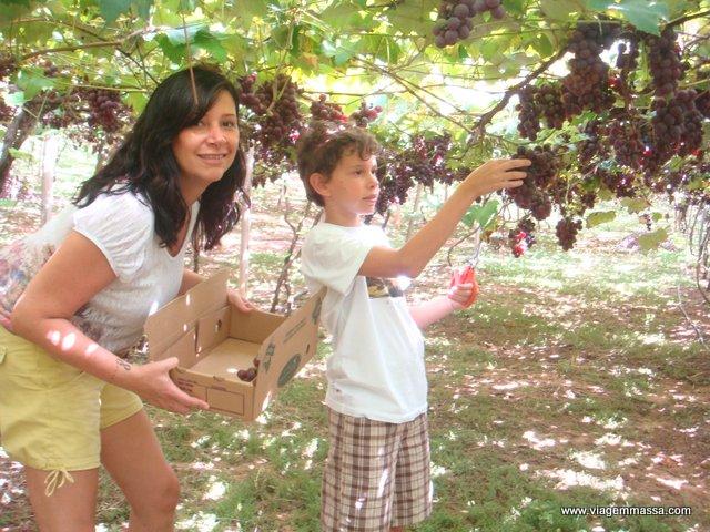 uvas na tomazelli