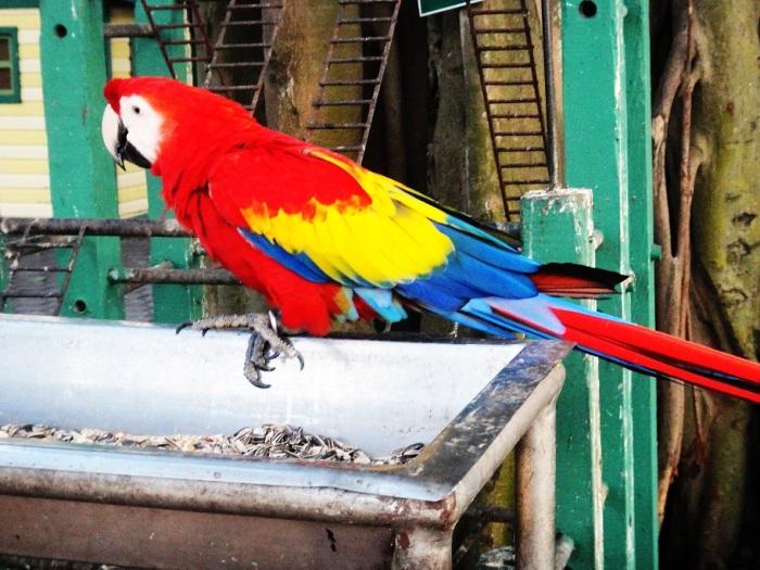 Pássaros livre, leves e soltos. Do jeito que a gente gosta.